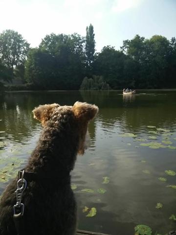 hund hd b1